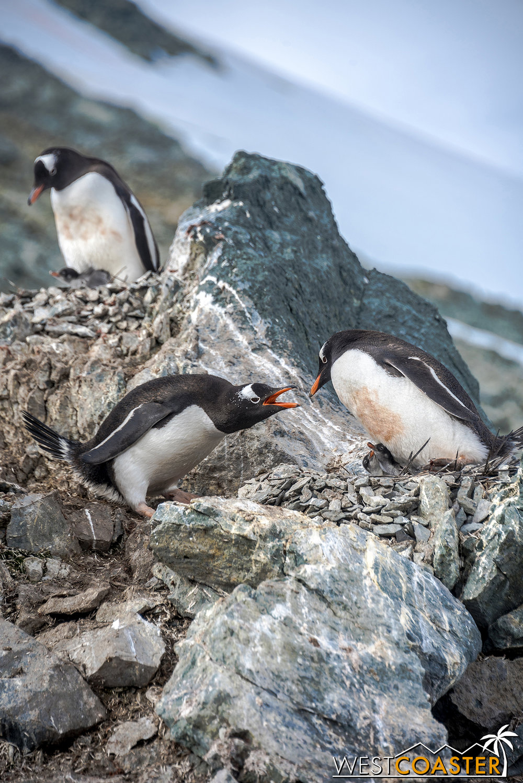 Antarctica-18_0207-0045.jpg