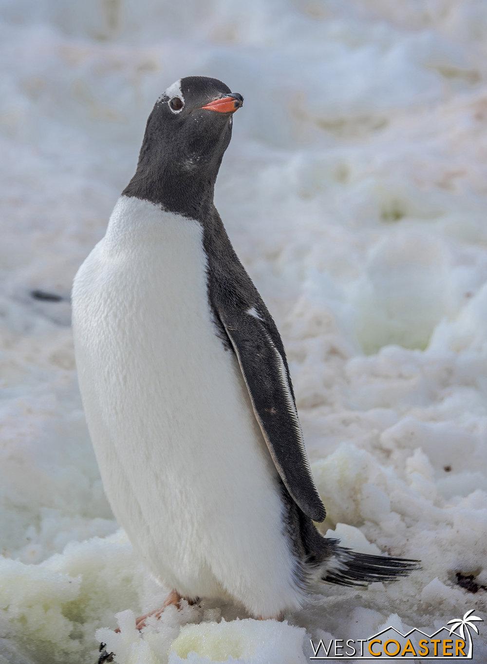 Antarctica-18_0207-0046.jpg
