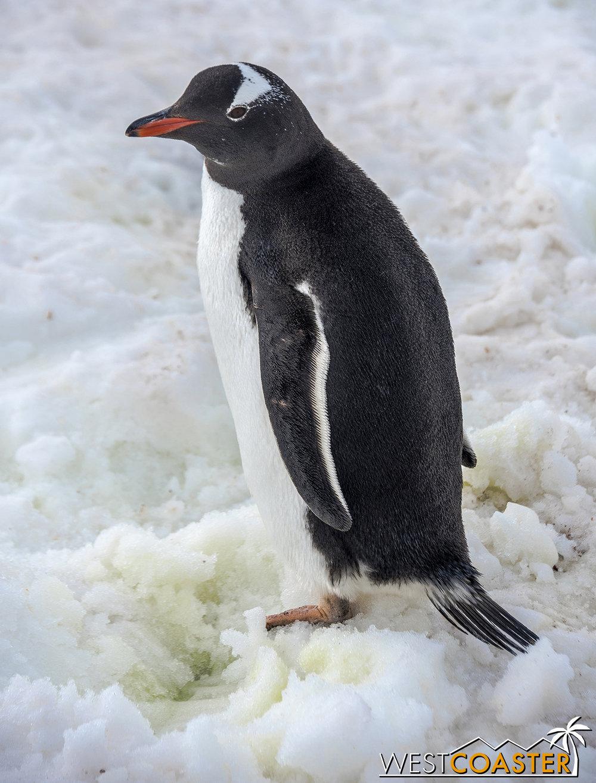 Antarctica-18_0207-0047.jpg