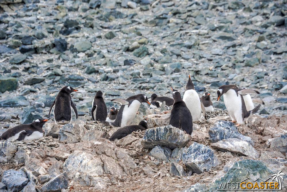 Antarctica-18_0207-0048.jpg