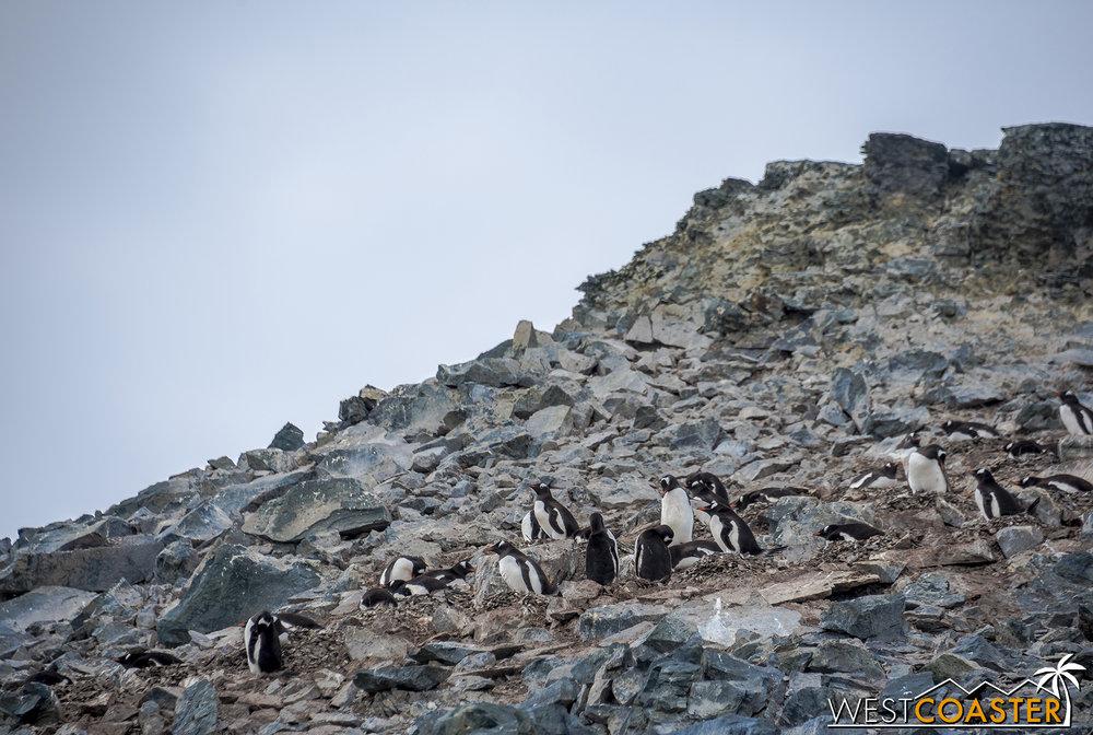 Antarctica-18_0207-0050.jpg