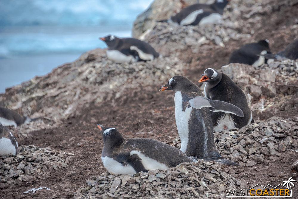 Antarctica-18_0207-0051.jpg