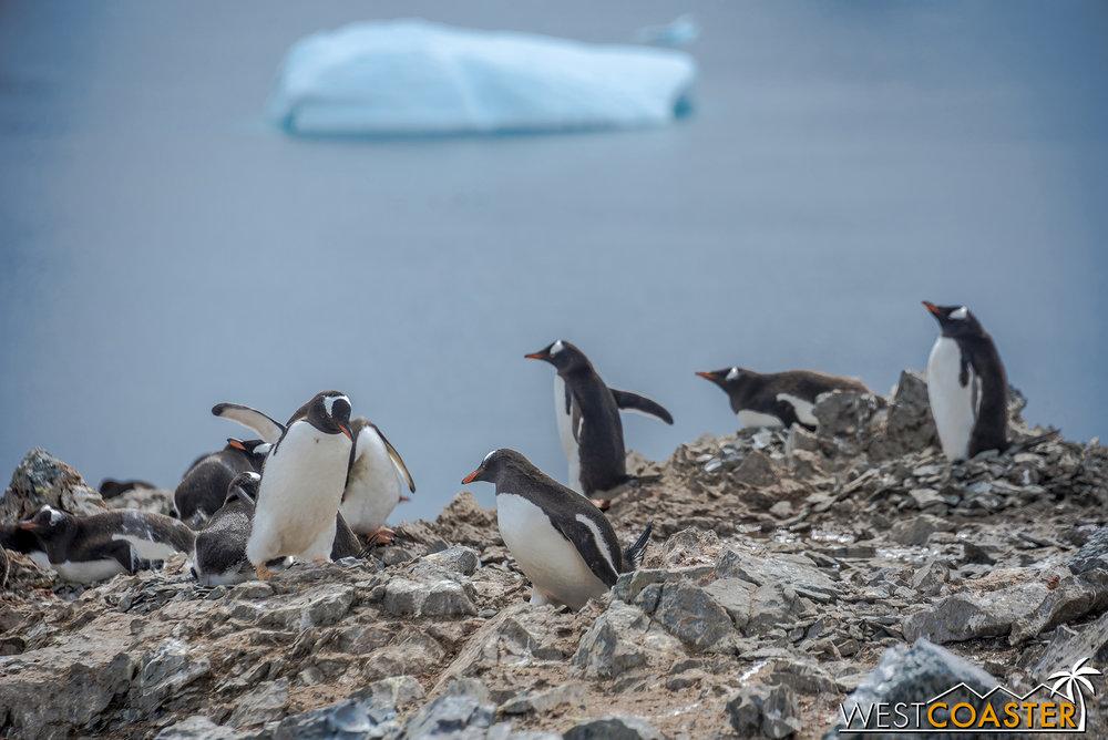 Antarctica-18_0207-0053.jpg