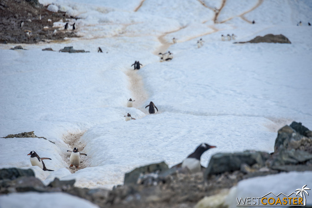 Antarctica-18_0207-0061.jpg