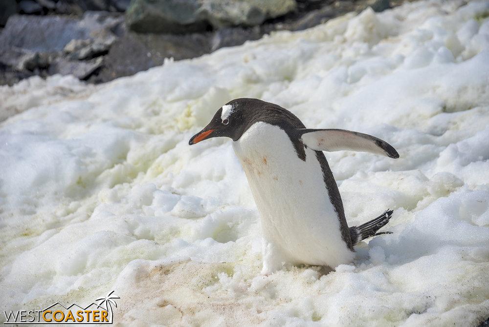 Antarctica-18_0207-0060.jpg