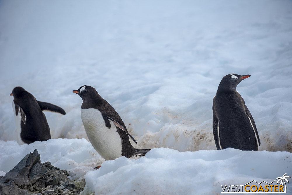 Antarctica-18_0207-0063.jpg