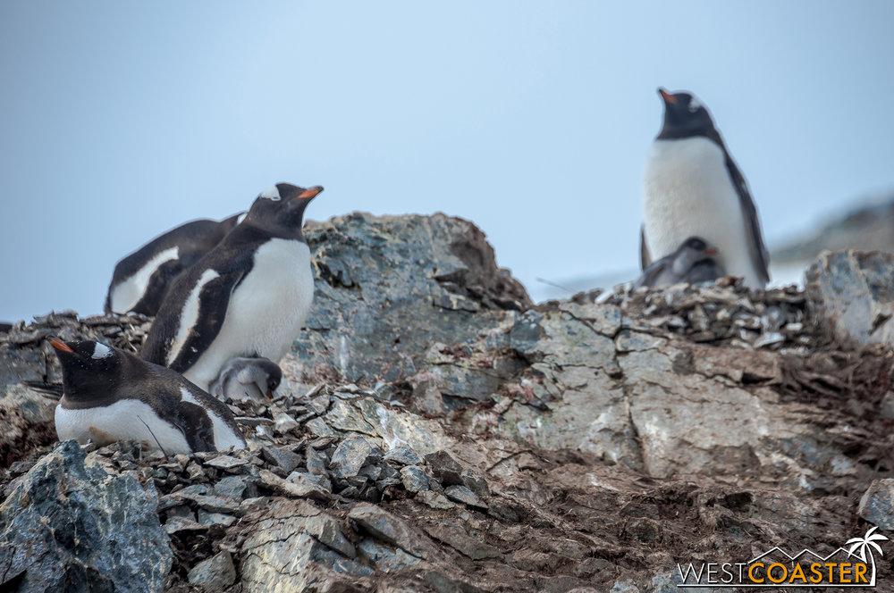 Antarctica-18_0207-0065.jpg