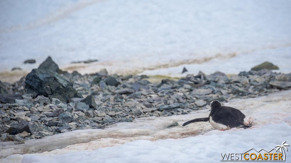 Antarctica-18_0207-0066.jpg