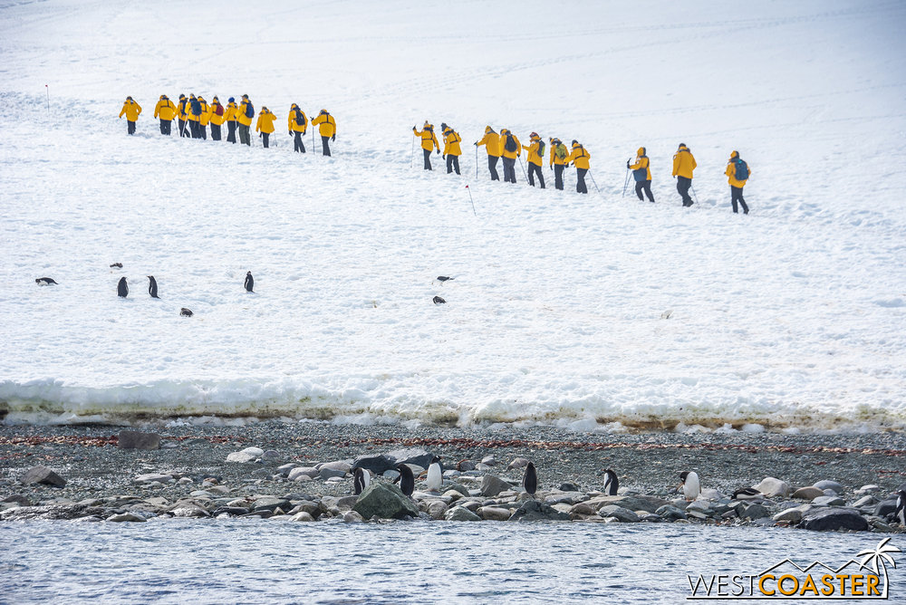 Gentoo penguins cluster on the beach, while other expedition members head uphill.