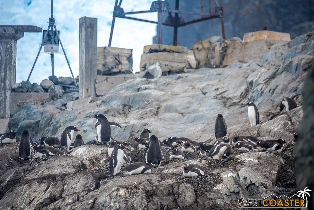 Antarctica-18_0222-0030.jpg