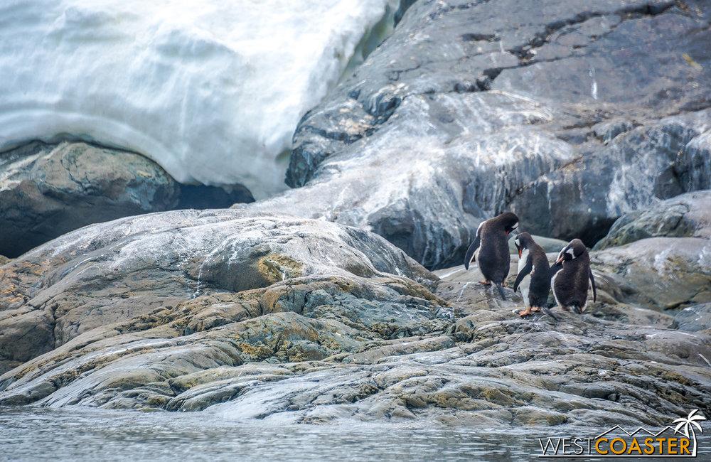 Antarctica-18_0222-0033.jpg
