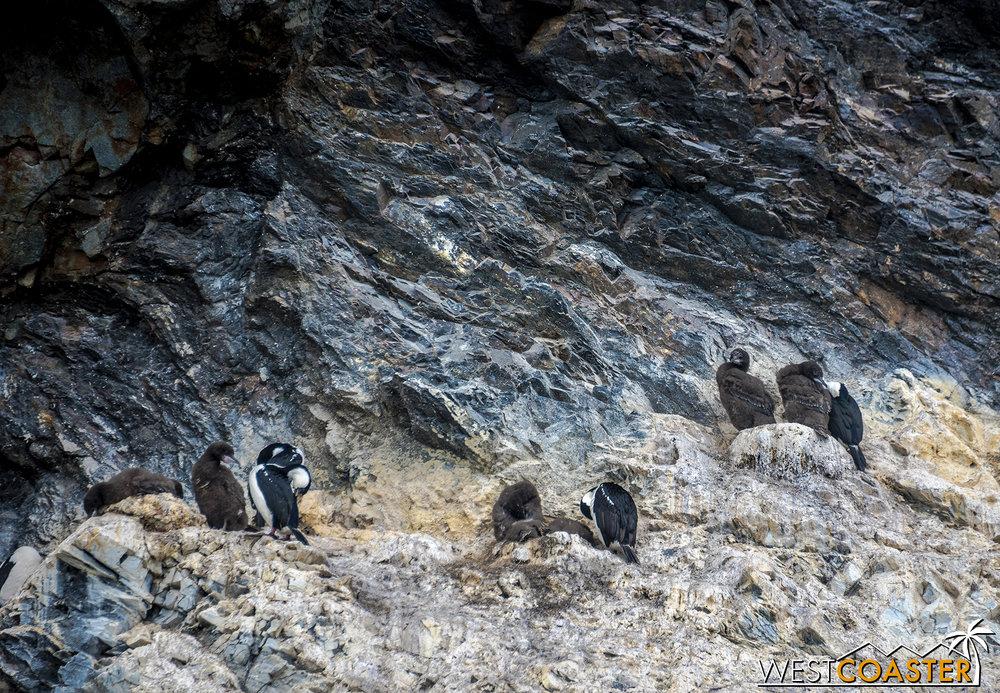 Antarctica-18_0222-0040.jpg