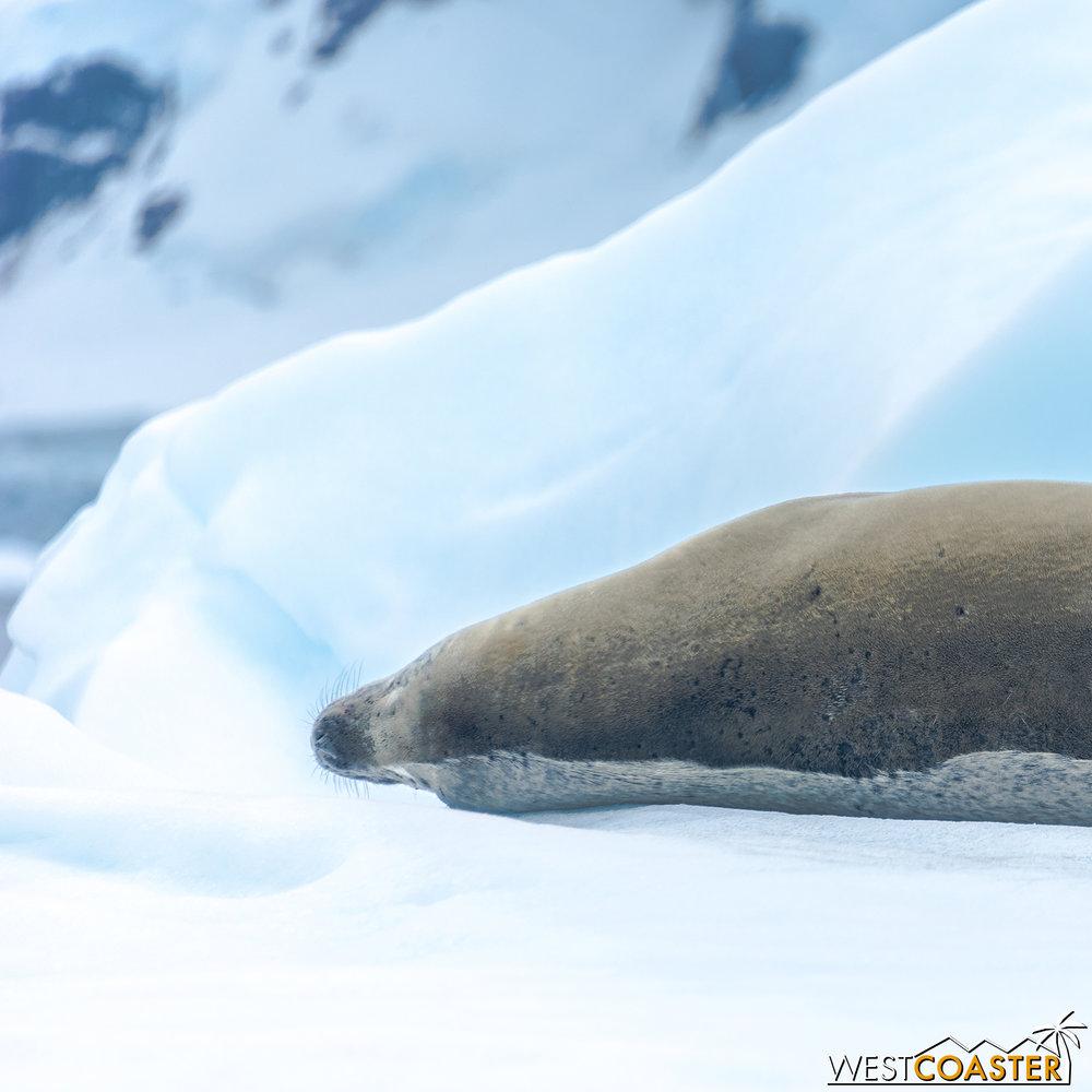 Antarctica-18_0222-0041.jpg