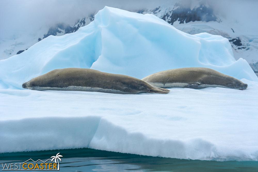 Antarctica-18_0222-0042.jpg