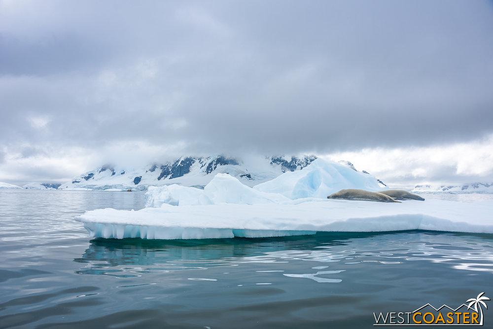 Antarctica-18_0222-0043.jpg