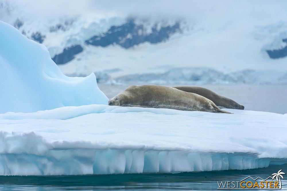 Antarctica-18_0222-0044.jpg
