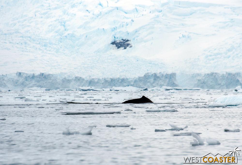 Antarctica-18_0314-0019.jpg