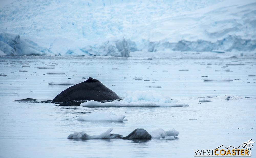 Antarctica-18_0314-0026.jpg