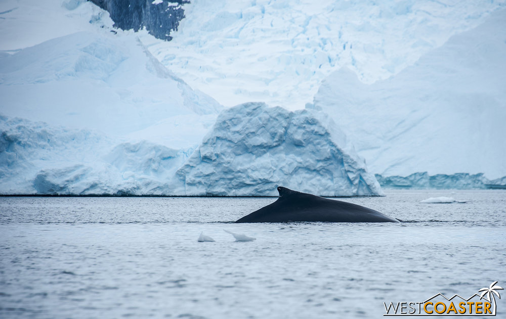 Antarctica-18_0314-0038.jpg