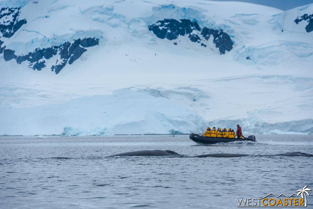 Antarctica-18_0314-0039.jpg