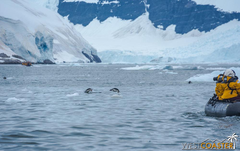 Antarctica-18_0314-0041.jpg