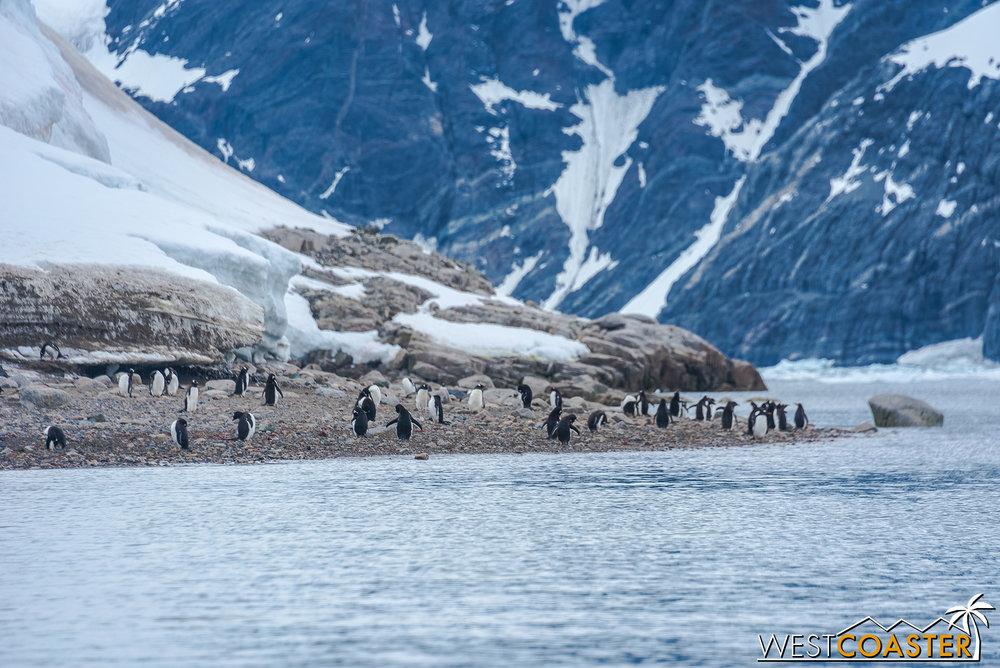 Antarctica-18_0314-0044.jpg