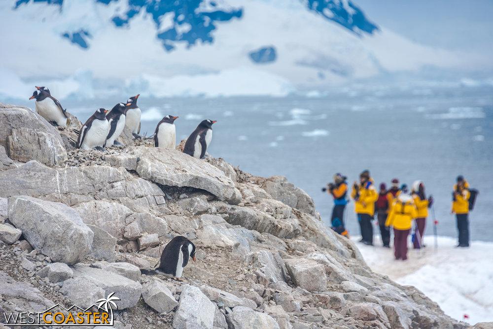 Antarctica-18_0314-0052.jpg