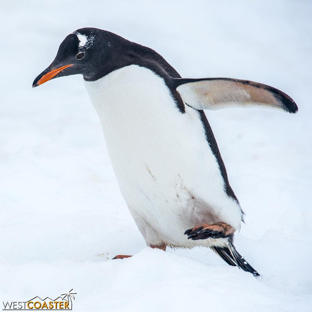 Antarctica-18_0314-0056.jpg