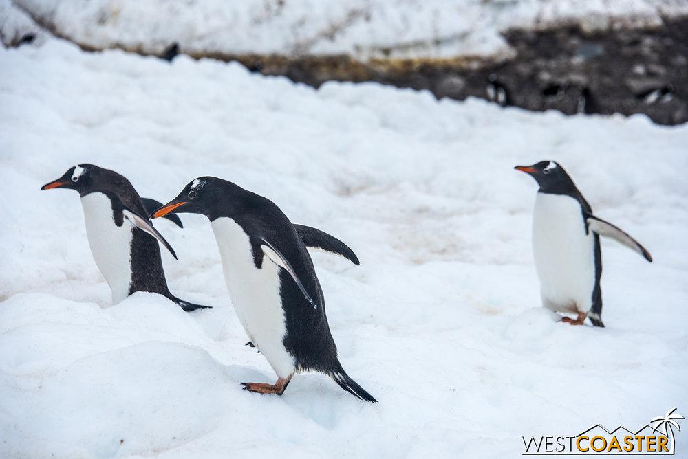 Antarctica-18_0314-0057.jpg