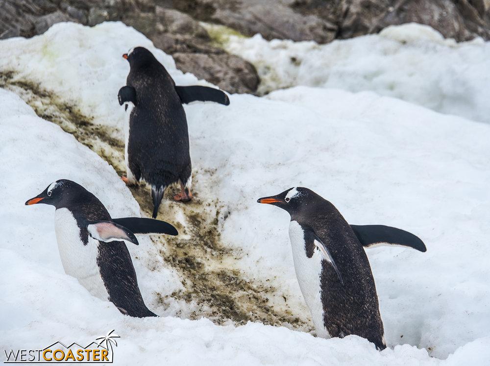 Antarctica-18_0314-0058.jpg
