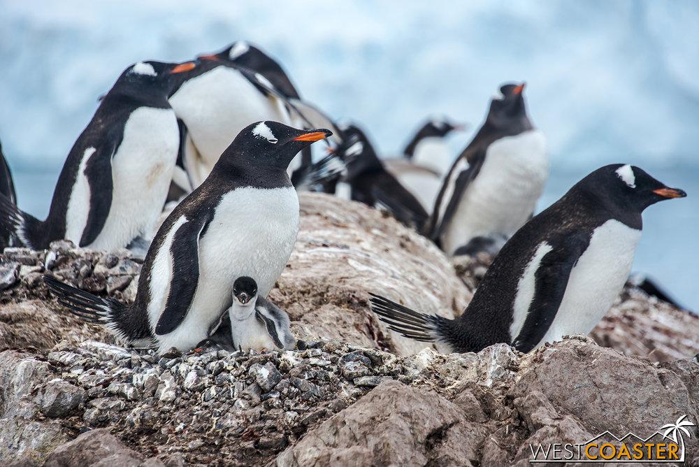 Antarctica-18_0314-0062.jpg