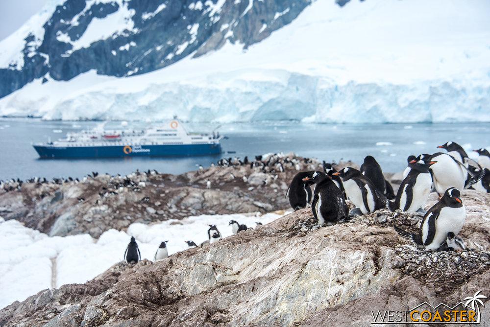 Antarctica-18_0314-0064.jpg