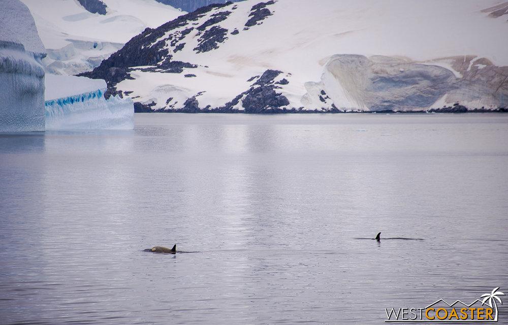 Antarctica-18_0606-A-Whales-0003.jpg