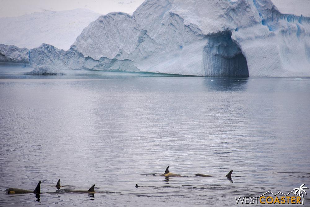 Antarctica-18_0606-A-Whales-0005.jpg