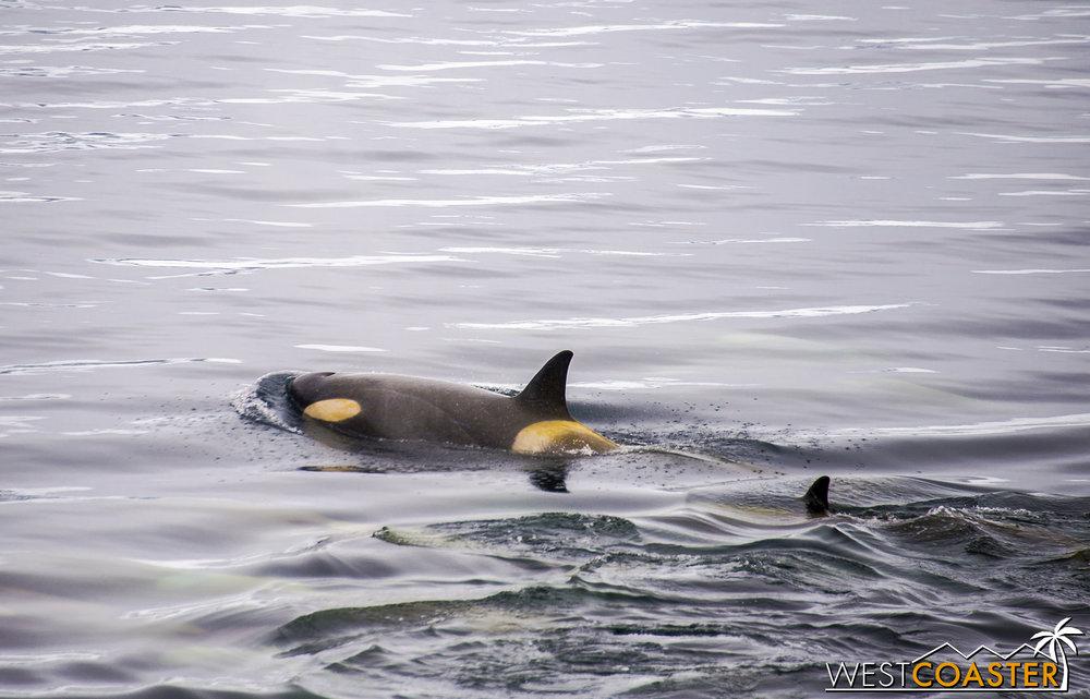 Antarctica-18_0606-A-Whales-0007.jpg