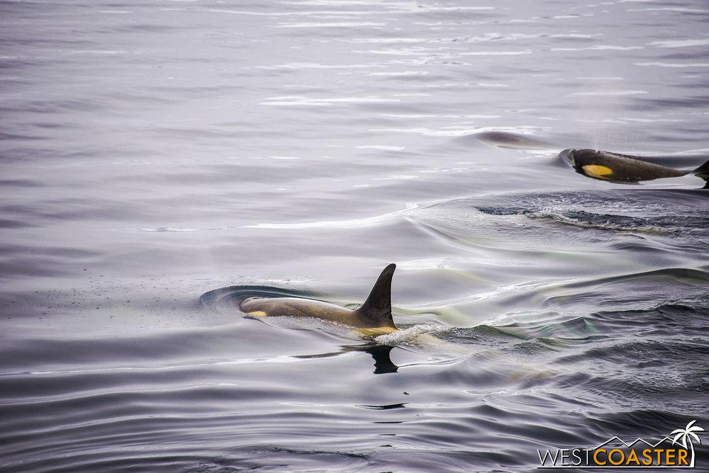 Antarctica-18_0606-A-Whales-0008.jpg