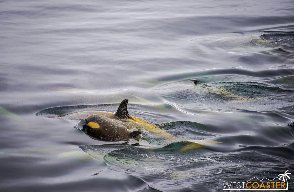 Antarctica-18_0606-A-Whales-0009.jpg