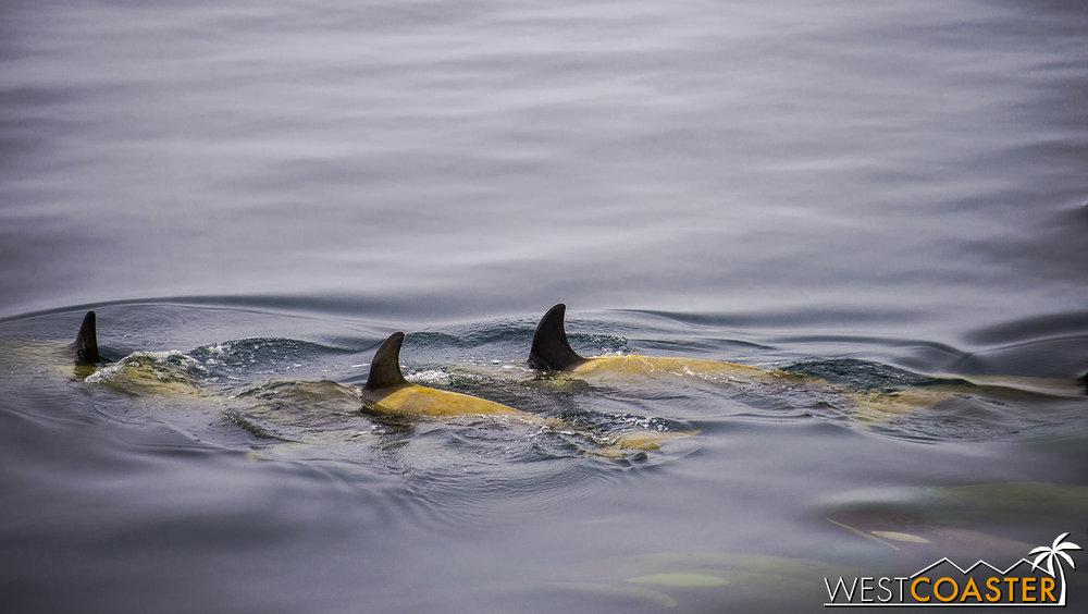 Antarctica-18_0606-A-Whales-0011.jpg