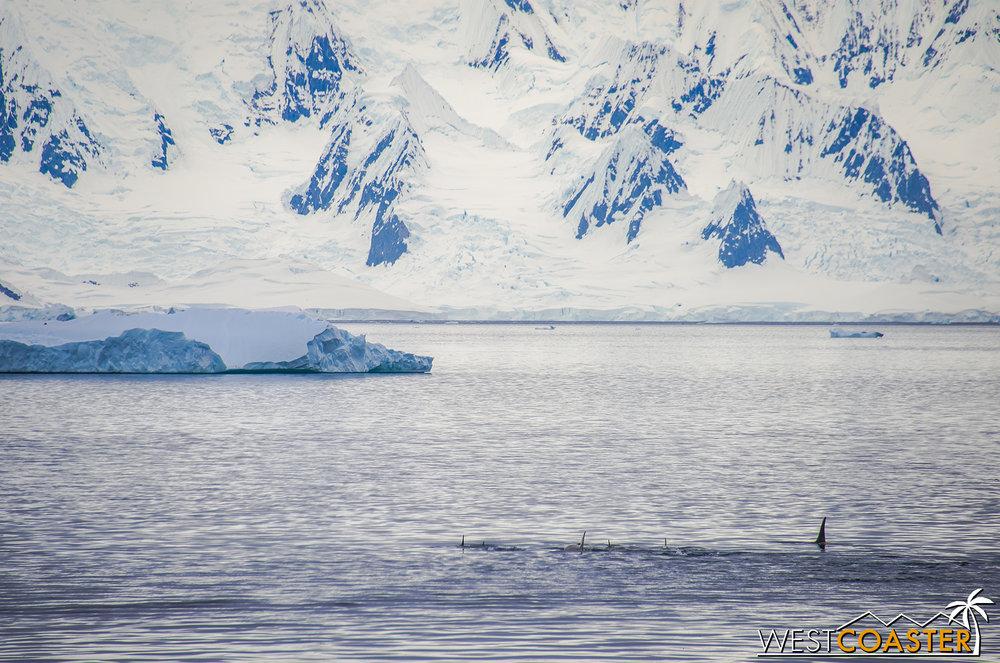 Antarctica-18_0606-A-Whales-0014.jpg