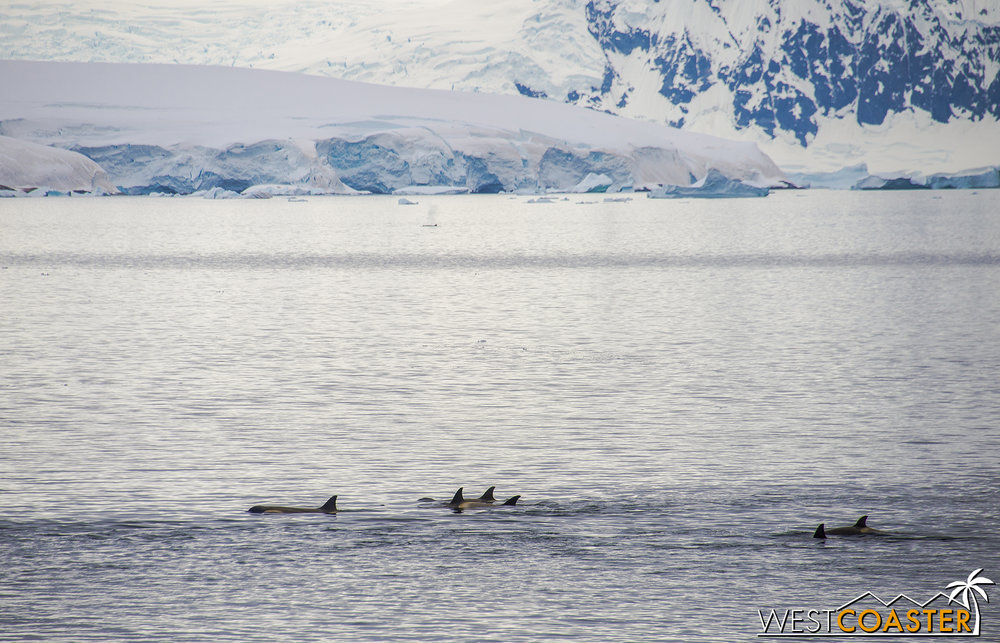 Antarctica-18_0606-A-Whales-0016.jpg