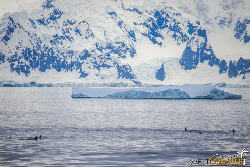 Antarctica-18_0606-A-Whales-0015.jpg