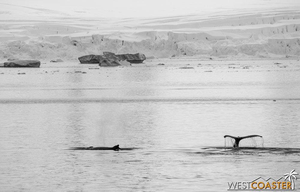 Antarctica-18_0606-A-Whales-0020.jpg