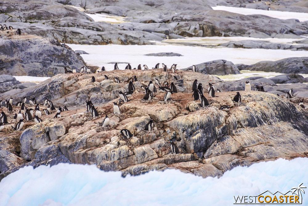 Antarctica-18_0609-0003.jpg