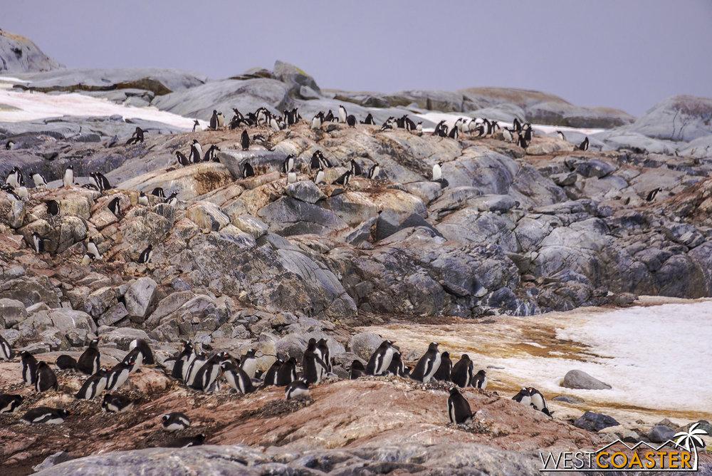 Antarctica-18_0609-0006.jpg
