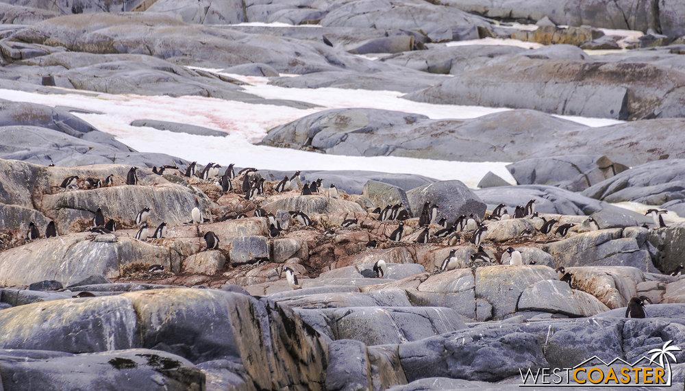 Antarctica-18_0609-0008.jpg