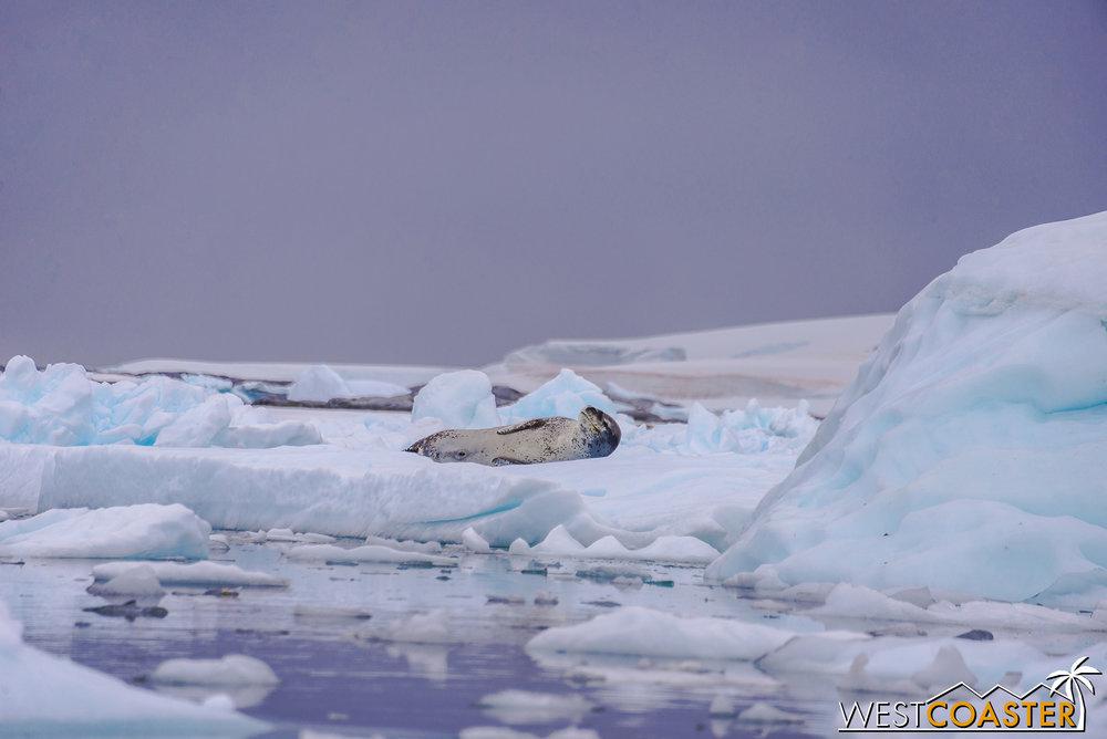 Antarctica-18_0609-0009.jpg