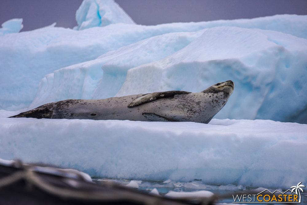 Antarctica-18_0609-0012.jpg