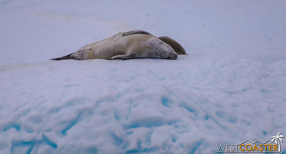 Antarctica-18_0609-0013.jpg