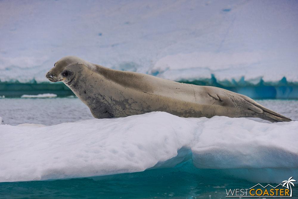 Antarctica-18_0609-0017.jpg