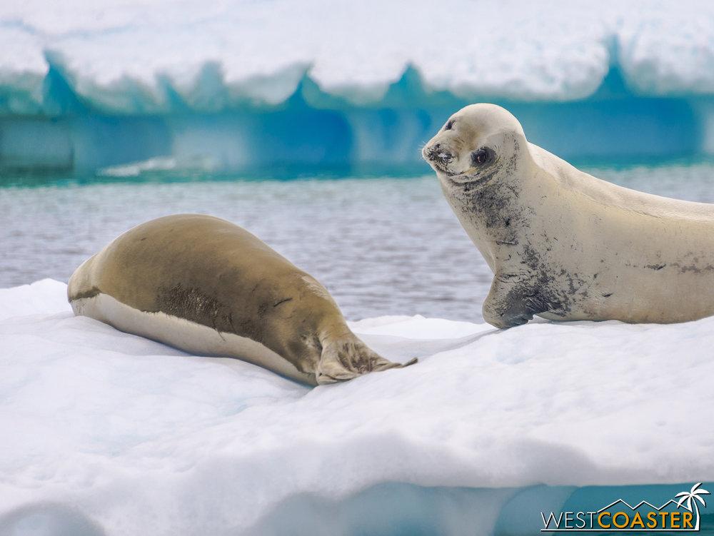 Antarctica-18_0609-0021.jpg